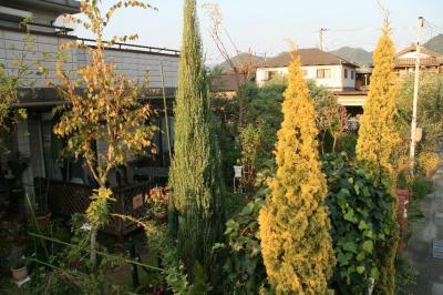 2009-11-08_72.jpg