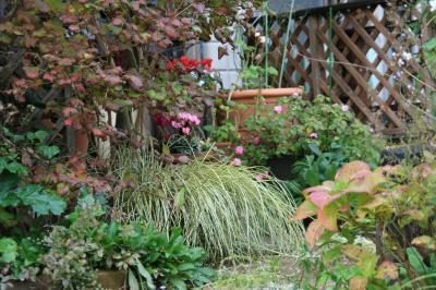 2009-11-23_17.jpg