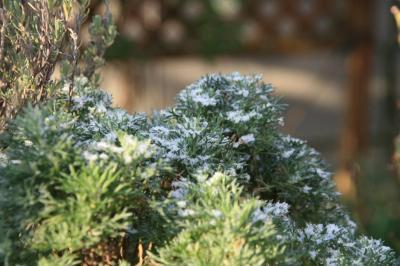 2009-12-21_03.jpg
