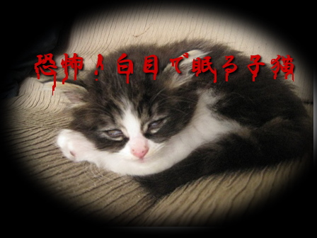 IMG_4672.jpg