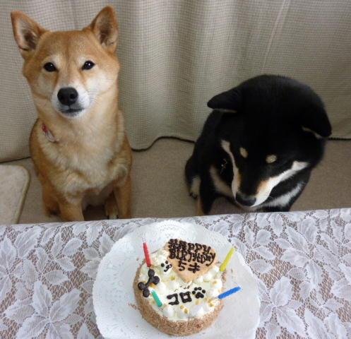 コロ 5歳誕生日