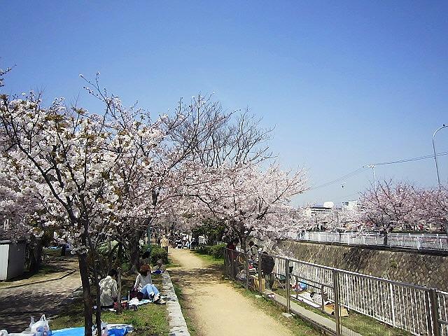 板宿の妙法寺川で花見(*^_^*)