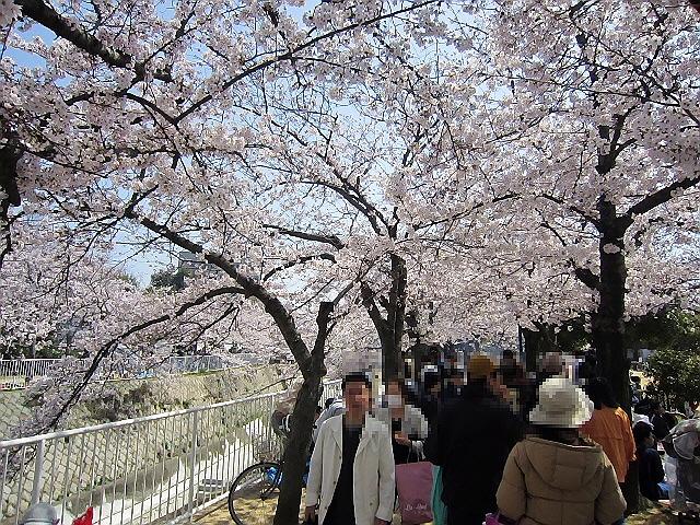 妙法寺川でお花見【後編】(*^_^*)