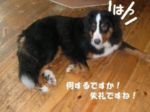 DSCN1280_convert_20100704165236.jpg