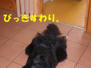 DSCN1283_convert_20100704165427.jpg