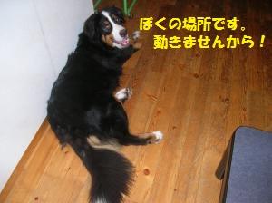DSCN1298_convert_20100705205442.jpg