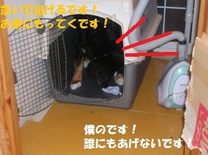 DSCN1299_convert_20100705205546.jpg