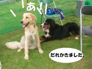 DSCN1347_convert_20100711161142.jpg