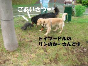 DSCN1348_convert_20100711161219.jpg