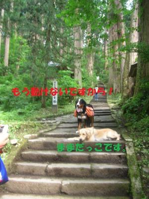 DSCN1464_convert_20100725162816.jpg