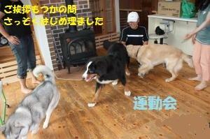 IMG_2363_convert_20100628081503.jpg