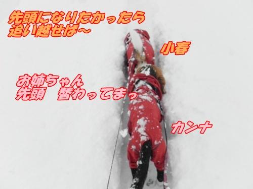 DSCN4907_20130201154242.jpg