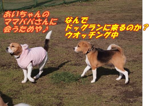 P1018814_20130323143057.jpg