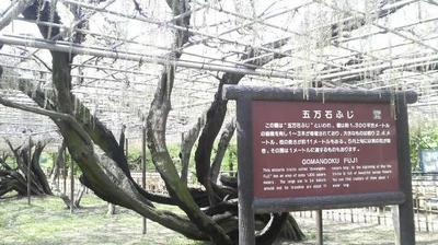 okazaki203.jpg