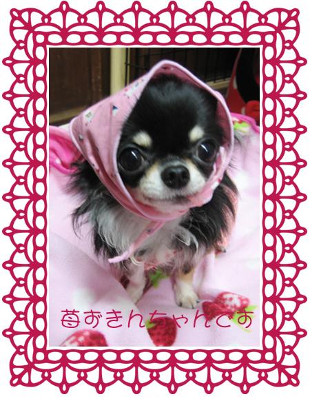 苺ずきんちゃん