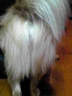 2.伸びた尻毛