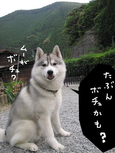 Boss_13.jpg