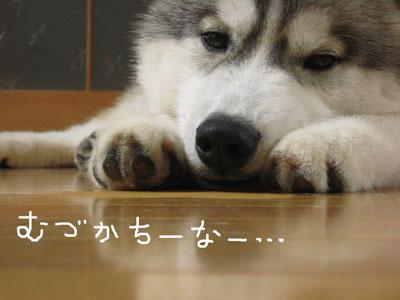Boss_15.jpg