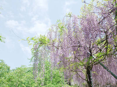 fuji_14.jpg