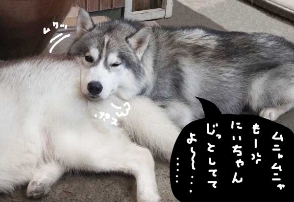 oshirimakura04.jpg