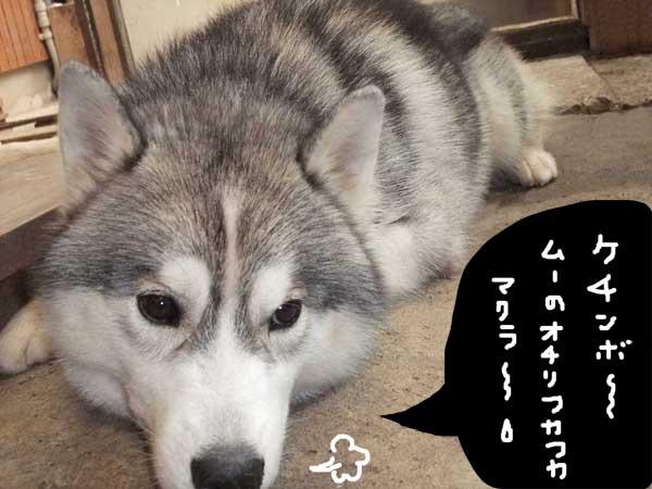 oshirimakura08.jpg