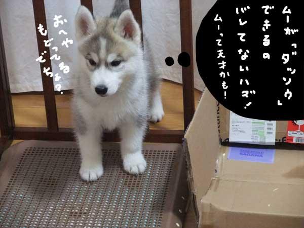 seicyouki05.jpg