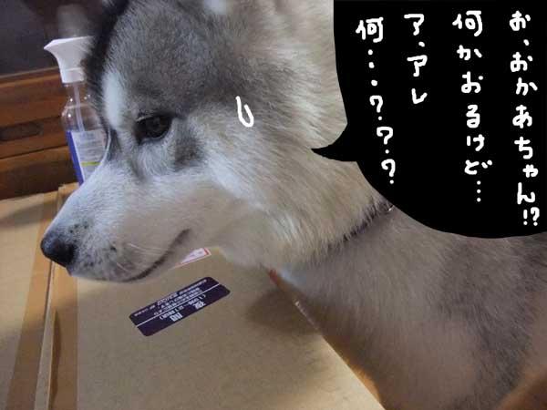 seicyouki07.jpg