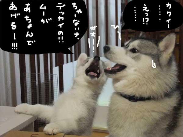seicyouki10.jpg