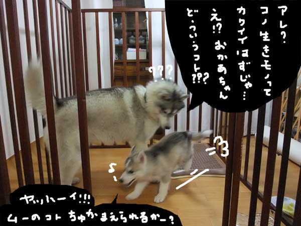 seicyouki11.jpg