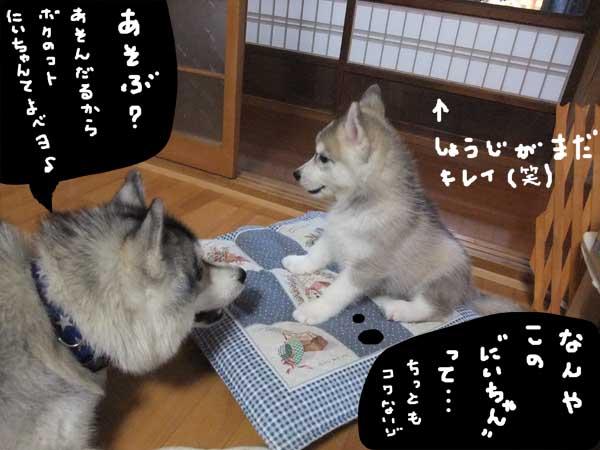 seicyouki14.jpg