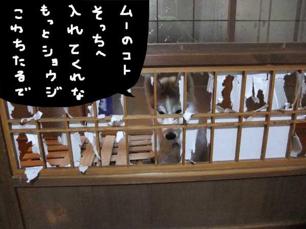 seicyouki15.jpg