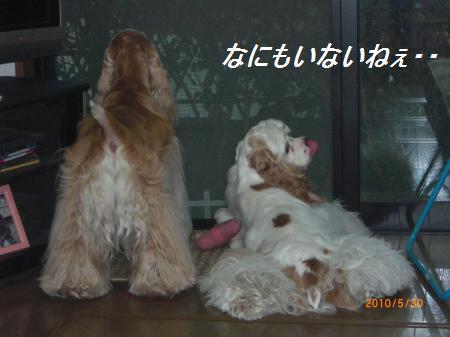 006_convert_20100530195907.jpg