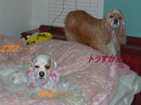 008_convert_20101213215752.jpg