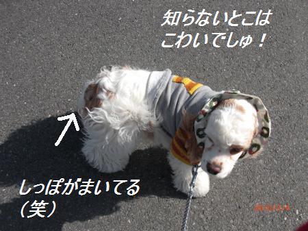 025_convert_20100204195542.jpg