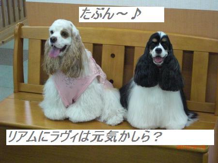 041_convert_20100921195658.jpg