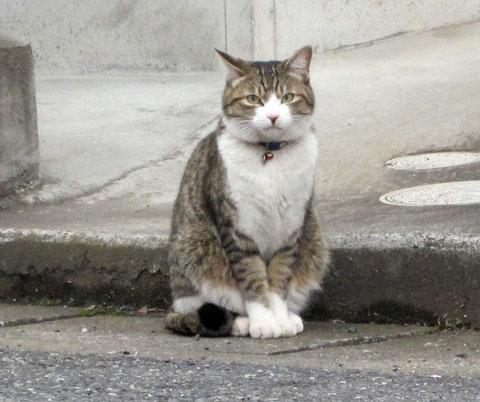 伊奈町寿の猫