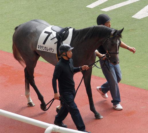 北島三郎さんの馬