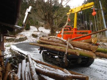薪用の木が集まった