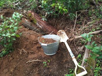 イノシシの掘った土