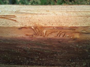 線香虫の穴