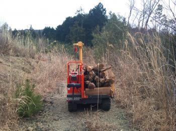 朽木を集める