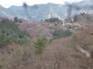 sakura20111.jpg