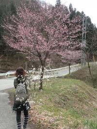 sakura20112.jpg