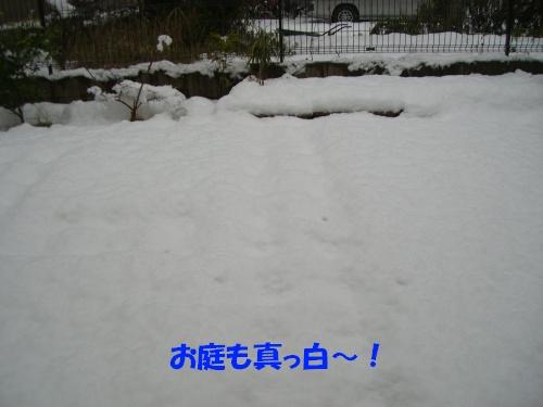 CIMG0883.jpg