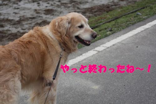 bu-48250001.jpg