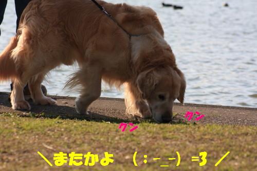 bu-49230001.jpg