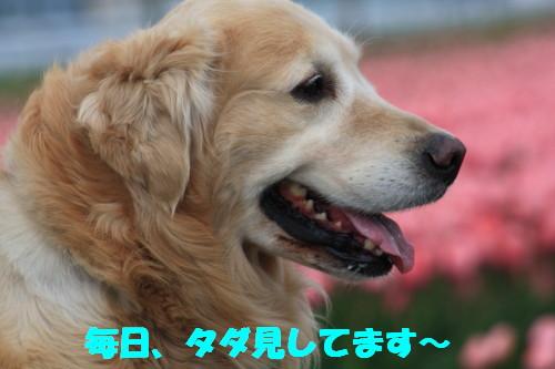 bu-49330001.jpg