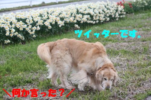 bu-49350001.jpg
