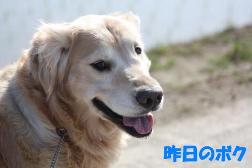 bu-49860001.jpg