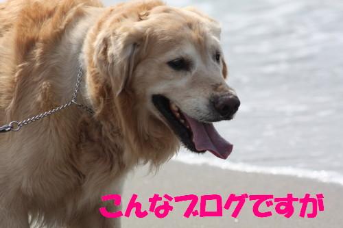 bu-49930001.jpg